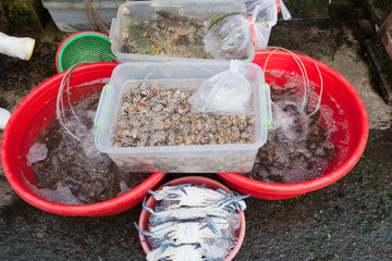 different seafood on the market