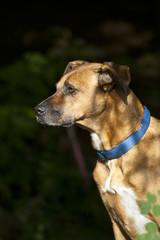 Hund Portrait im Wald