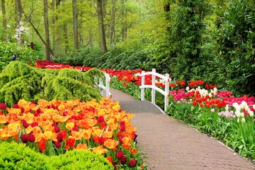 Walkway through spring flowers at Keukenhof Gardens, Netherlands