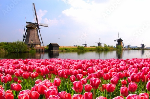 Foto op Plexiglas Cultuur Pink tulips with Dutch windmills along a canal, Netherlands