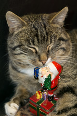 Cat with Santa Toy