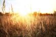 Sunny summer field - 79066374