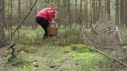 Woman walking and mushroom picking in forest