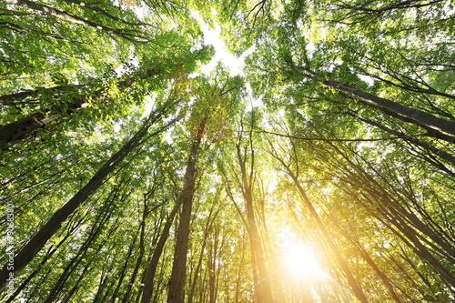 Deurstickers Bossen Forest