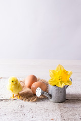 Easter eggs with chicken and daffodil