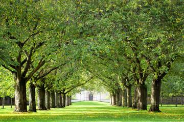 Grüne Baumallee im Park