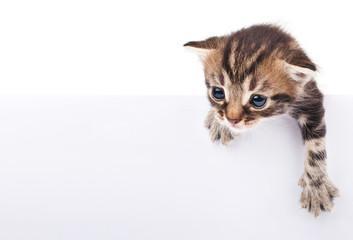 kitten behind white signboar