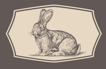 Rabbit in engraving style.