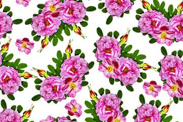Floral background. briar