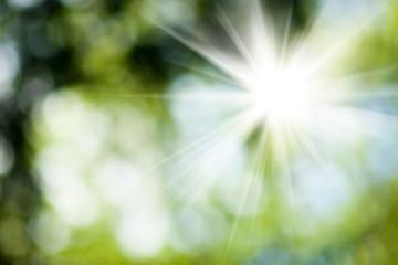 sun in the blurry natural green background closeup