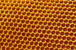 Bee honeycombs with honey close up, a natural background - 79078557