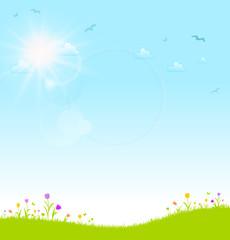 Blumenwiese Sonne