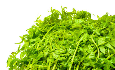 vegetable fern