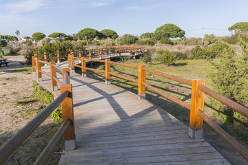 Wooden path in natural surroundings