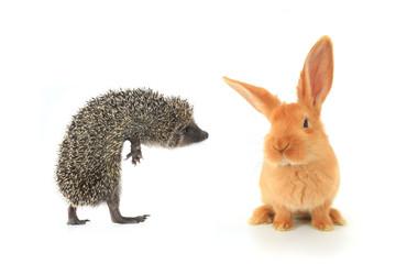 hedgehog and brown rabbit