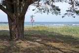 Tree and life saving buoy on the beach in Ahus, Sweden. poster