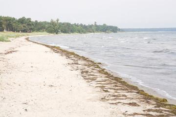 Sandy beach with seaweed, Ahus, Sweden.