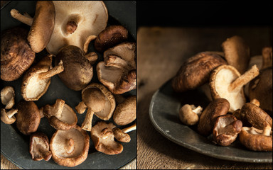 Compilation of images of Fresh shiitake mushrooms in moody natur