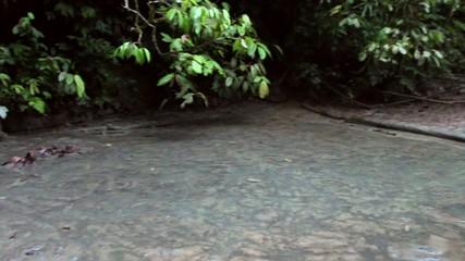 """A 'salt lick"""" on the rainforest floor in Ecuador"""