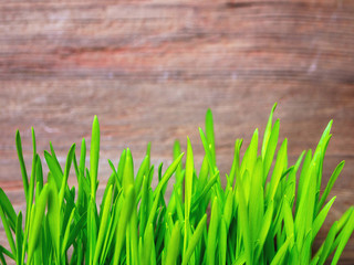 Gras vor Holzwand