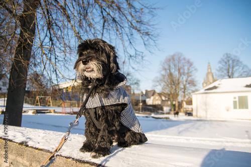 Poster Schwarzer Hund mit Wintermantel