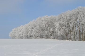 vereister Wald im Winter