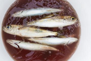 gefangene fische