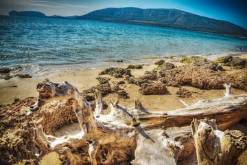 driftwood by Mugoni beach shoreline