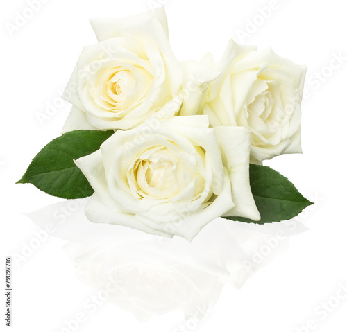 Fotobehang Rozen white roses isolated on the white background