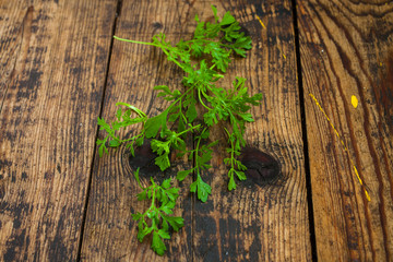 leaves of a garden cress
