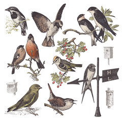collection of vintage bird illustrations on white