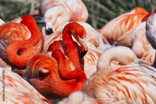 Foto op Aluminium Flamingo Group of flamingos