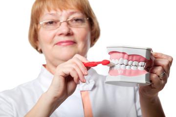 Dentist with denture for demonstration