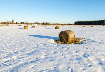 Abandoned field with haystacks by winter