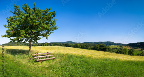 Fotobehang Landschap Grüne Landschaft mit blauem Himmel und Parkbank