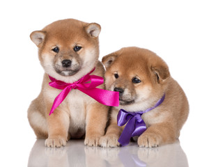 two adorable puppies with ribbons