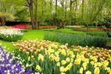 Fototapety Spring flowers at Keukenhof Gardens, Netherlands