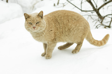 Concept of march - cat's mating season