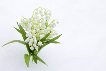 Lilies of valley in snow, close-up