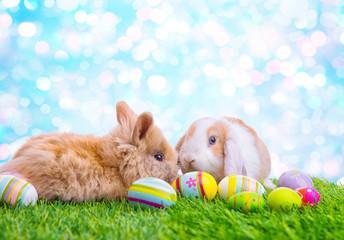 Ostern in der Natur mit Hasen