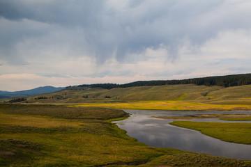 Hayden Valley - landscape of American Bison