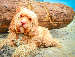 Cute Puppy in the Sand