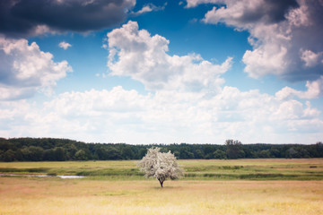 Lonely tree. Landscape with cloudy sky and tree in meadow