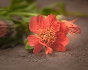 Dekoration mit Nelkenwurz und Ringelblume