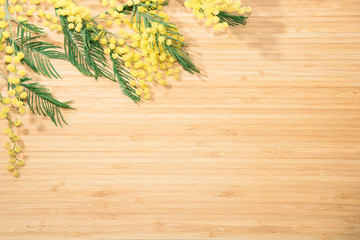 Branch of mimosa on a bamboo table
