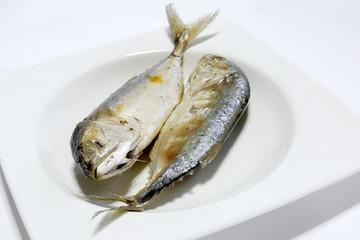 Mackerel fish isolated on a white background