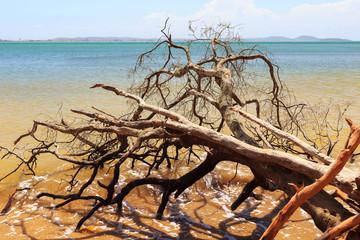 Dead broken tree in waves of sea after hurricane, storm