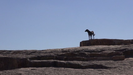 lonely black dog silhouette on mountains rock in India