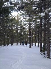 ormanda yürüyüş