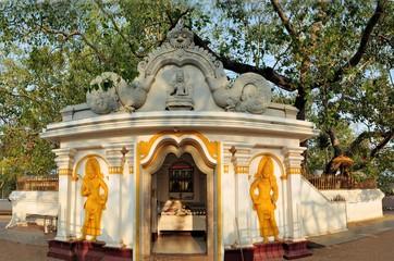 Sacred Buddhist Maha Bodhi tree, Sri Lanka